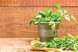 CINCI ALIMENTE MIRACULOASE: germenii de grâu, drojdia de bere, polenul, iaurtul şi pătrunjelul