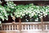 Zi de iunie în Călineşti