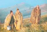 Ciobani fără frontiere - Novăcenii