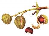 Sănătate cu alimente: Neplăcerile verii