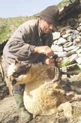 Ciobanii vindecători din Varlaam