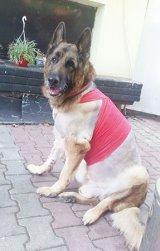 Dr. NICOLAE BERCARU - Medic veterinar -
