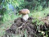 Împăratul ciupercilor