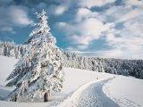 Leacurile de iarnă ale pădurii
