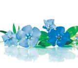 Din reţetele domnului farmacist Bobaru: Tratamente cu plante pentru BOLILE CEREBRALE