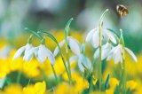 Energizarea de primăvară