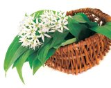 Din reţetele domnului farmacist Bobaru: Cura de primăvară cu plante verzi şi flori