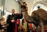 Biserica animalelor