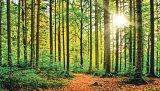Poveşti din primăvara pădurii