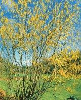 Puterea vindecătoare a copacilor - ALUNUL