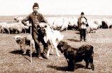 Privelişti din istoria ciobăniei - FLORENTINA TEACĂ: