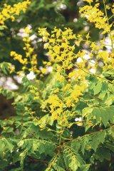 Din reţetele domnului farmacist Bobaru: Tratamente cu flori de Mai
