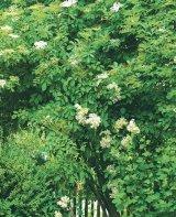 Puterea vindecătoare a copacilor - SOCUL