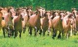 """""""Formula AS"""", în Clisura Dunării: Insula cailor sălbatici"""