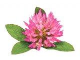 Frumuseţe cu flori de vară