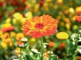 HOMEOPATIE - Cele mai bune remedii prezente în farmacii