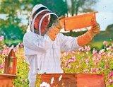 Tratamente cu miere