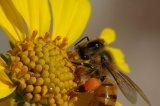 Reţete de sănătate cu produse apicole
