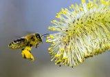"""""""Alergia la polen m-a vlăguit"""""""