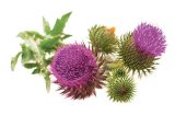 Remedii naturale împotriva steatozei hepatice