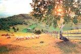 Cărţi de aur, ale trecutului românesc - JINA, capitala ciobanilor