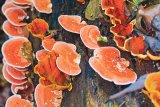 Sănătate cu ciuperci
