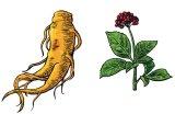 Plante pentru anii