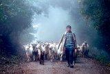 Fotograful din poienile cu bujori - CIPRIAN CENAN: