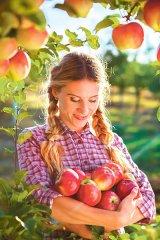 Vremea merelor