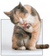 """De rasă sau """"de streaşină"""": ce pisică alegeţi?"""