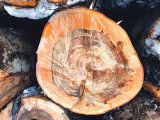 Natura şi istoria dărâmate cu drujba şi cu buldozerul - Sarmizegetusa Regia la un pas de dezastru
