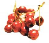 Din reţetele domnului farmacist Bobaru: Tonificarea de primăvară (1)