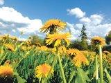 Din reţetele domnului farmacist Bobaru: Tonificarea de primăvară (2)