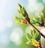 Gemoterapie de... primăvară