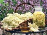 Reţete cu flori de vară - Salcâmul şi Socul