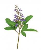 Plante de ajutor în endometrioză