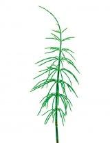 Din reţetele domnului farmacist Bobaru: Plantele medicinale ale lunii Iulie
