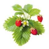 Terapia cu flori de fân