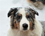 Câinele soldatului