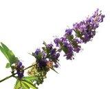 Cele mai vechi medicamente din lume - Ceaiurile din plante