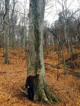 Parcul Naţional COZIA - Cum vine primăvara în pădure?