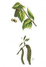 Reumatismul şi primăvara