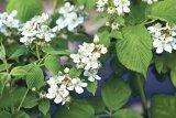 Din reţetele domnului farmacist Bobaru: Sănătate din frunze