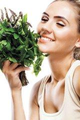 Reţete cu Mentă verde şi proaspătă