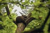SOS urşii din România!