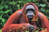 Incredibila lume a animalelor
