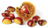 Terapia Padurii - Salcamul, nucul si fratii lor