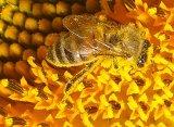 """Farmacia albinelor - Dr. Stefan Stangaciu: """"Iubiti albinele si ceea ce fac pentru om si natura"""""""