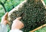 Un apicultor in plina vara