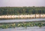 Delta Dunarii intre amenintare si speranta